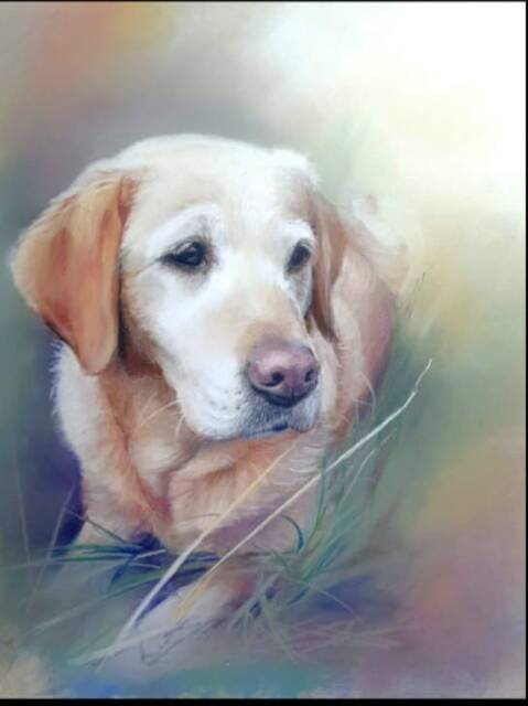 """Picture of """"Pet Portrait"""""""